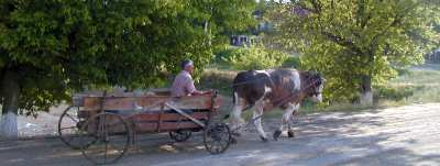Bull cart in Moldova